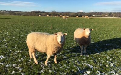 A Sacred Ceremony to Close 2020
