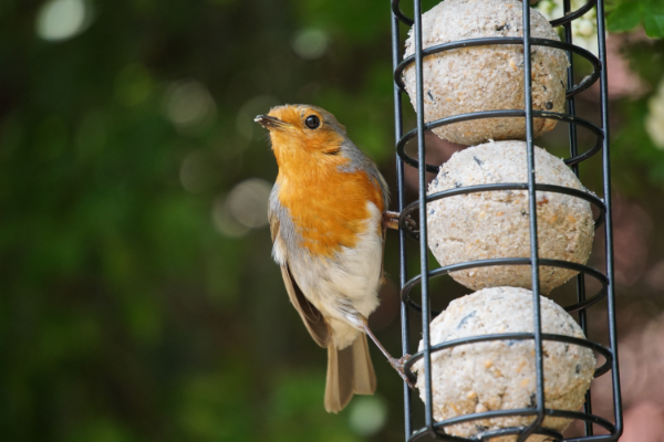 What Garden Birds Taught Me About Business